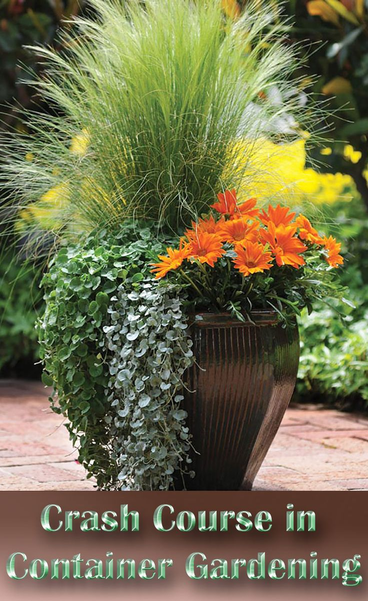 a crash course in container gardening QALEKLZ