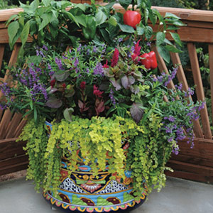 container gardening - bonnie plants LOYNTZE