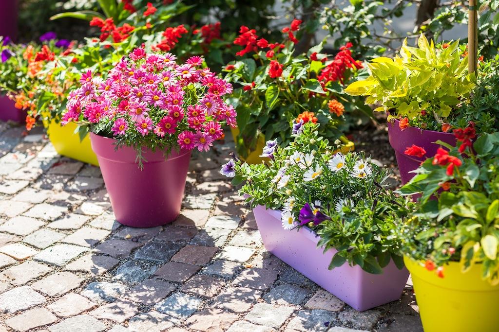 container gardening flower pots DPHWBTV