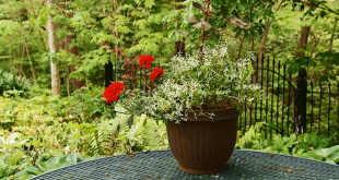 container gardening how to design
