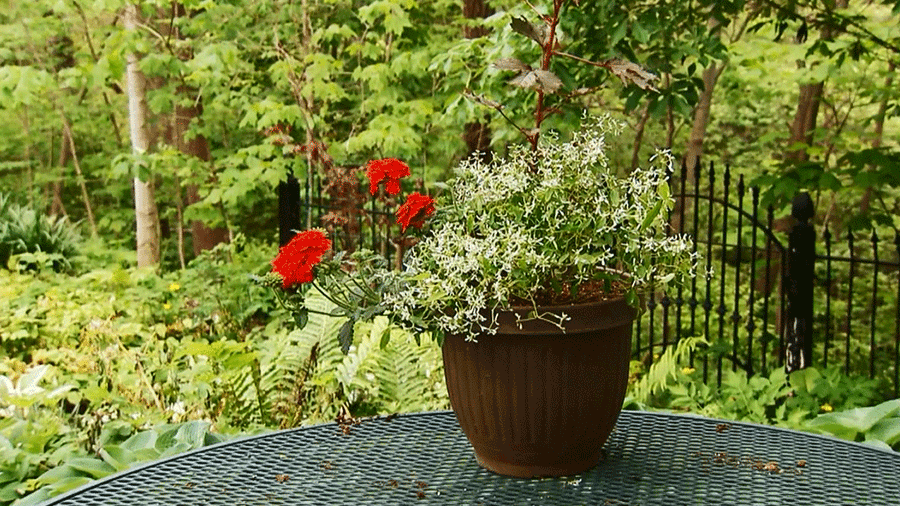 Container Gardening Ideas - yonohomedesign.com