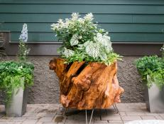 container gardening how to make a planter out of a recycled tree stump 18 photos KKZXXFS