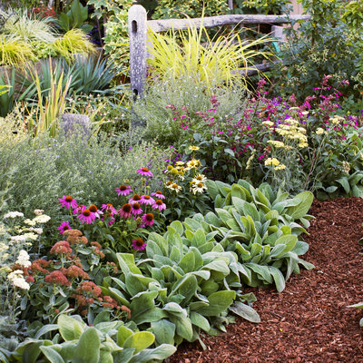 flower bed ideas all-star perennials QQBJLLO
