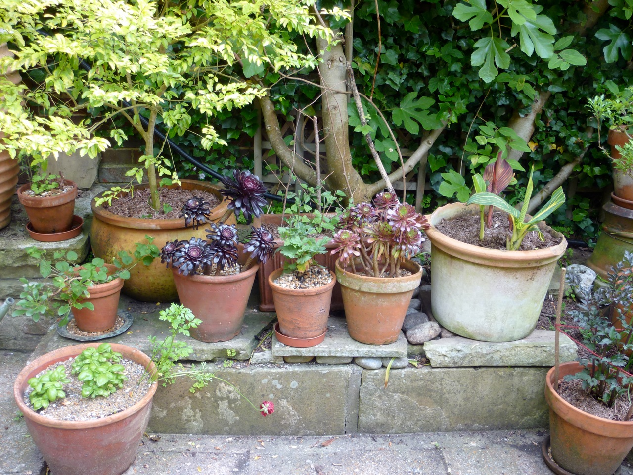 garden pots pots and planters the enduring gardener JDAEZPC