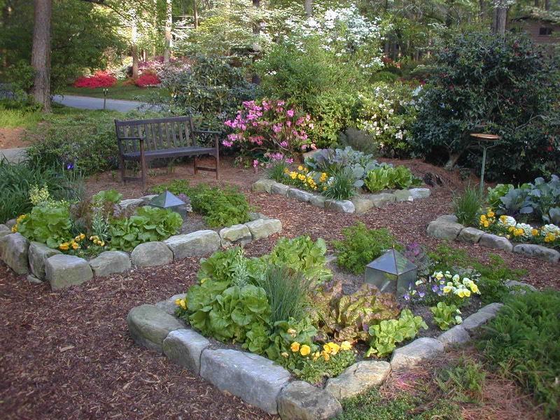 home garden organic vegetable garden herb edible kitchen garden IOTYZID