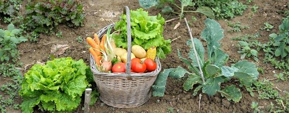 home garden vegetable basket XOHSDEQ