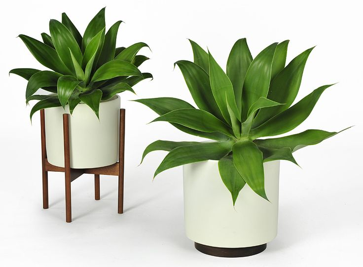 indoor plant pots designs and styles to pick | tips and inspiration home  ideas TGHOIVP