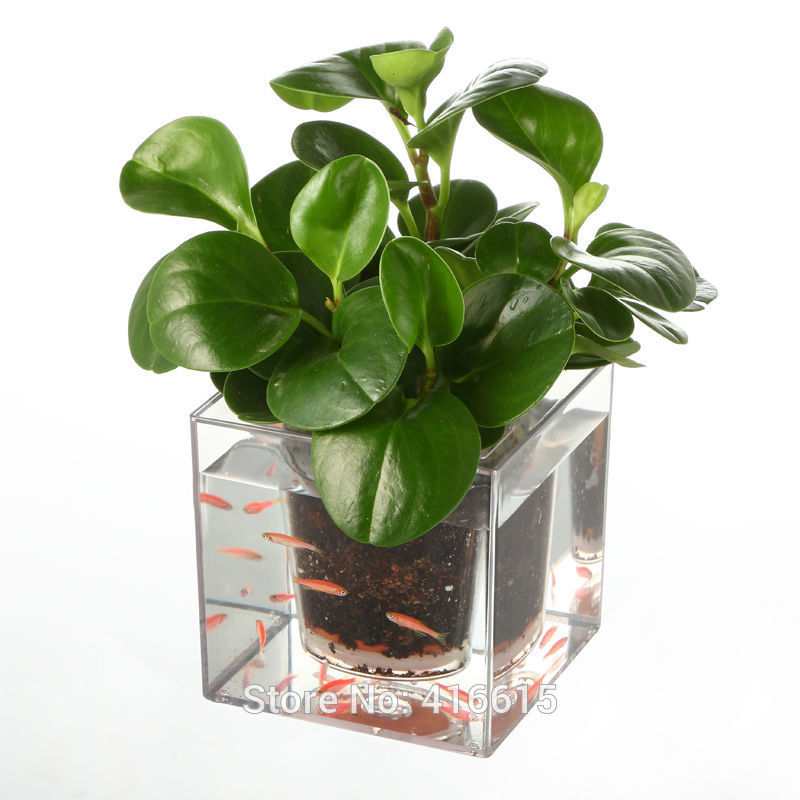 plant pots aliexpress.com : buy 1piece clear tube plant pot / flower pot self watering  planter fish tank IFXLQNP