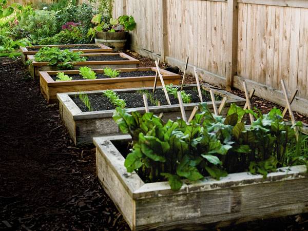 raised bed garden here are tips on planning, building, protecting and irrigating raised bed  gardens. URBODOH