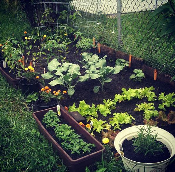 small home garden ZGVTTOV