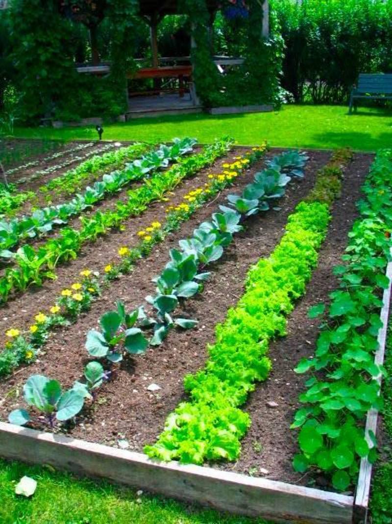 starting a home garden SUORZFR