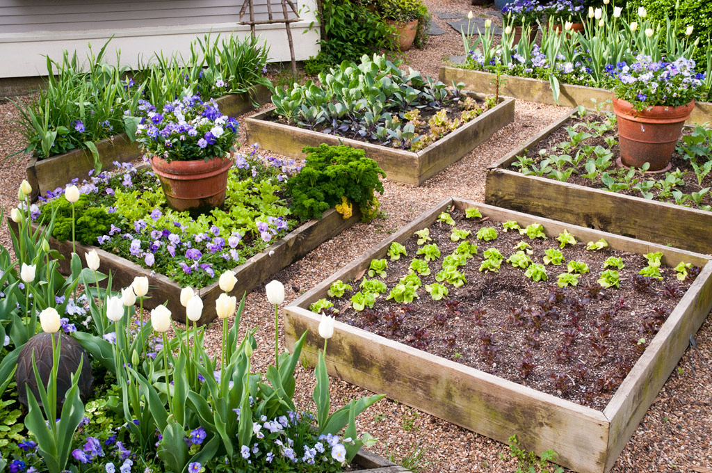 take your raised bed garden up a notch - bonnie plants SPQXNQG