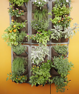 vertical garden decide on the type of garden RIPPWLZ