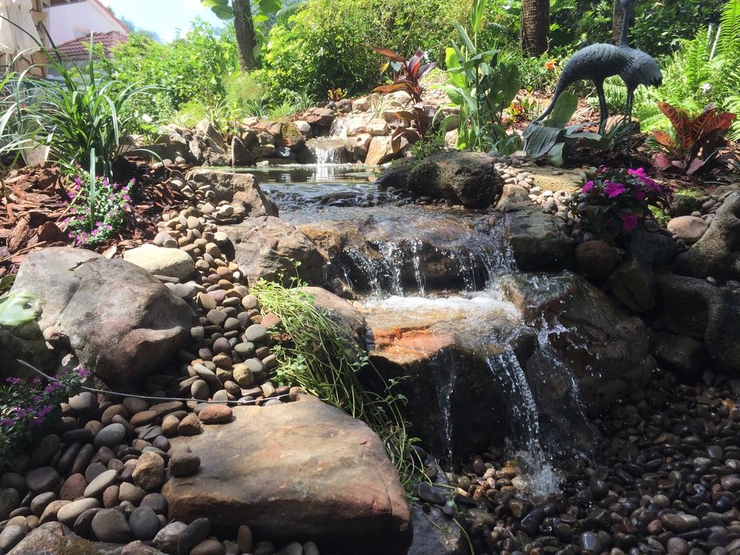 water gardens ecosystem pond new smyrna beach central florida RSRHING