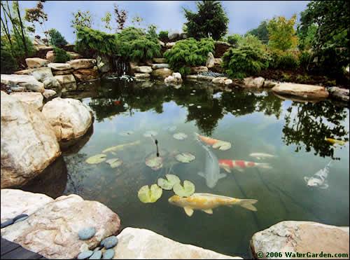 water gardens this 5,500 gallon pond was built using our tahiti pond kit. XYJRXTB