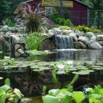 Water Garden Landscaping Ideas