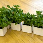 Add Color And Greenery To Outdoor And Indoor Space With Plant Pots