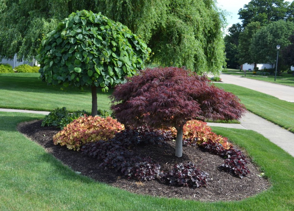 12 cheap landscaping ideas - budget-friendly landscape tips for front yard  and DGCVHQZ