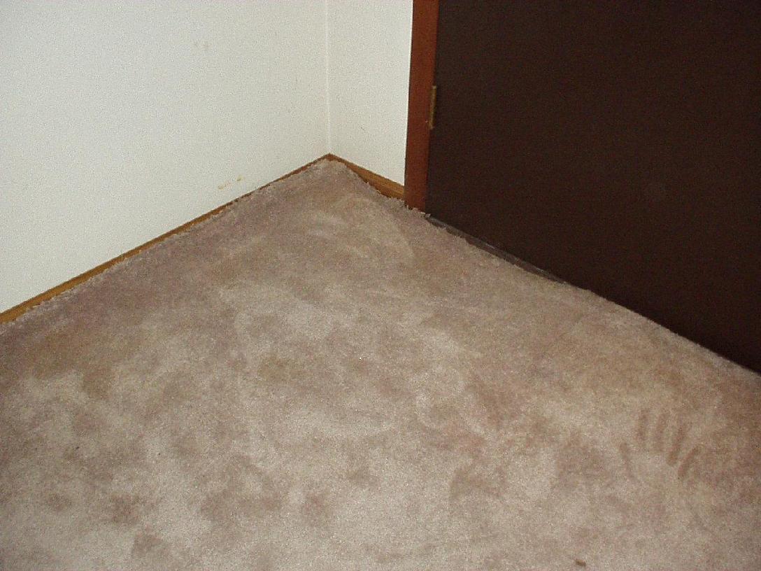 high quality carpets odorxit case stud1 UIUNJOQ