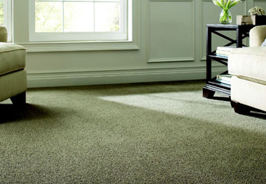home carpet LLPBTMW