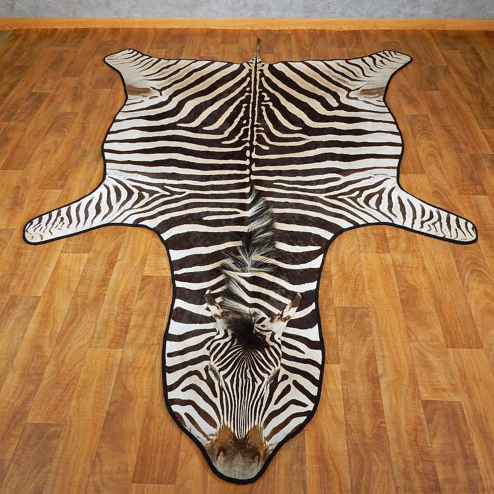 zebra rugs african zebra rug mount for sale #15265 @ the taxidermy store HKPJOHQ
