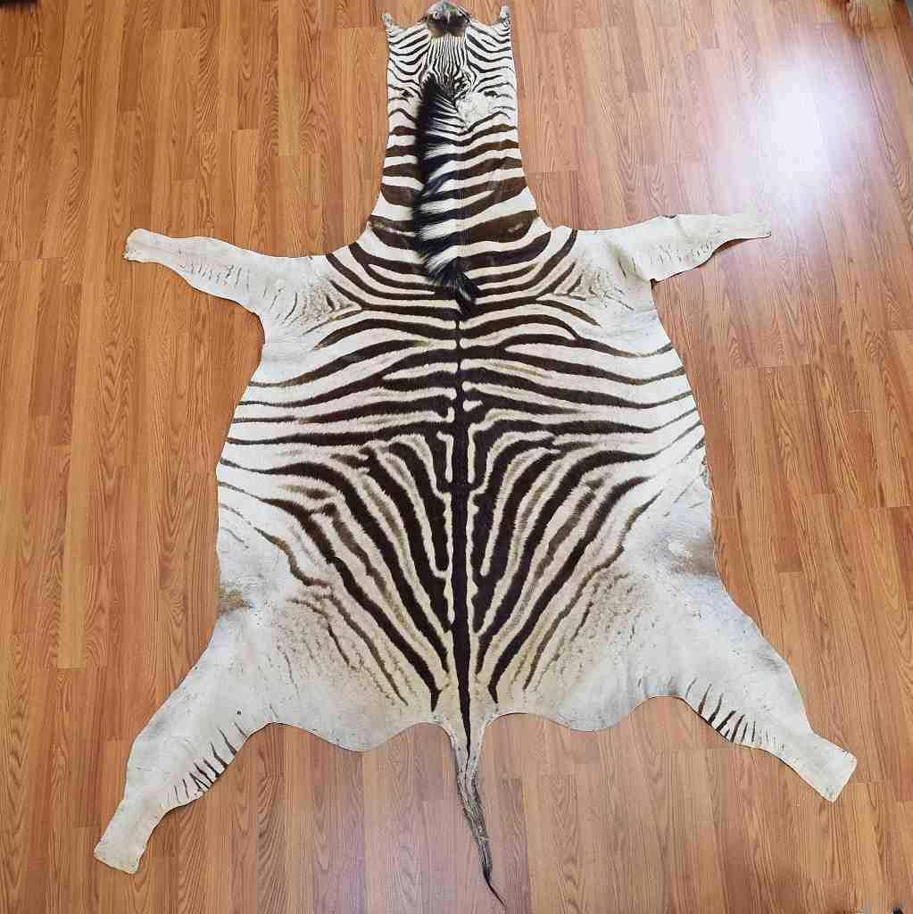 zebra rugs ... EVGTHDG