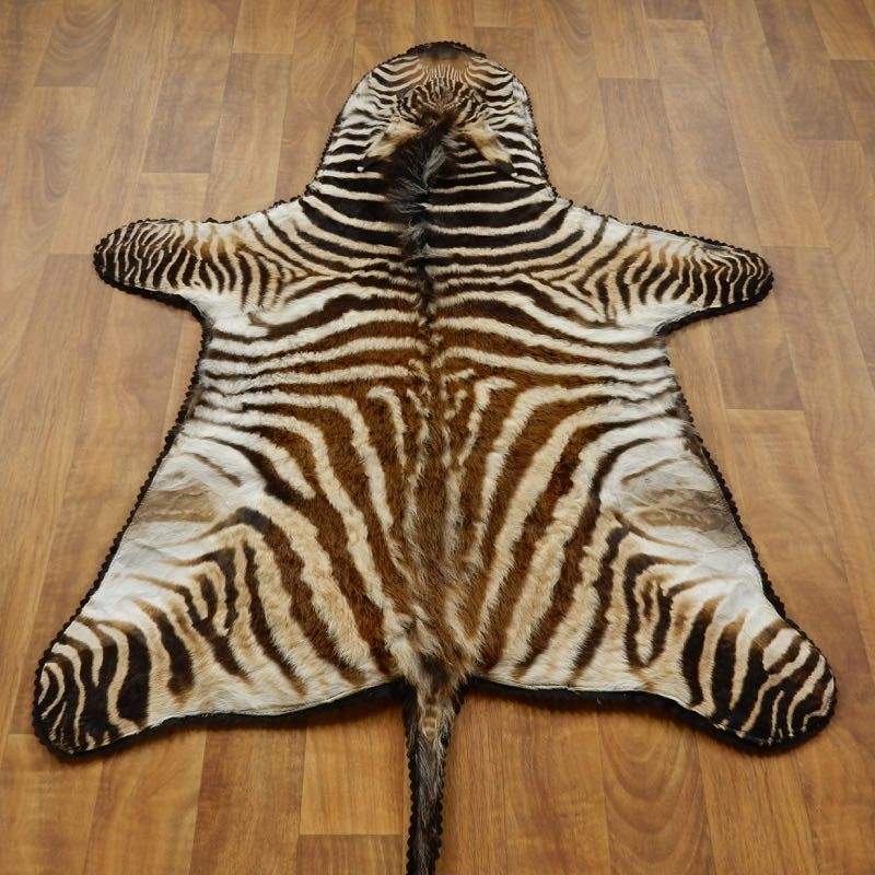 zebra rugs new zebra rug in african juvenile mount 17279 the taxidermy store  decorations JEFZWZJ