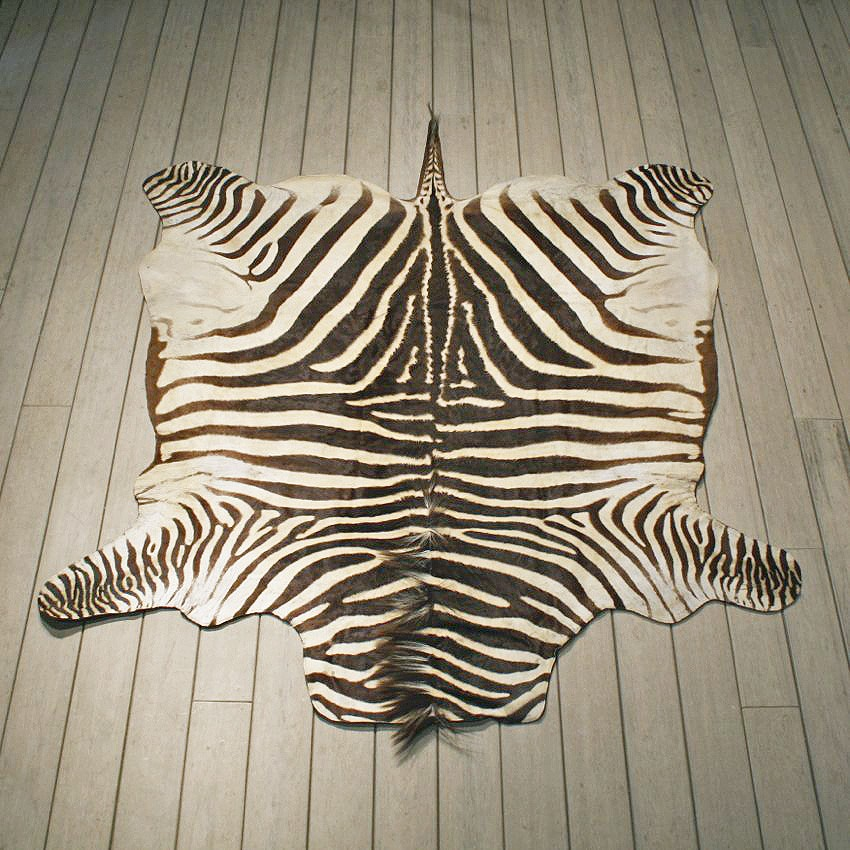 zebra rugs zebra rug mount #10953 - the taxidermy store PKYLSSY