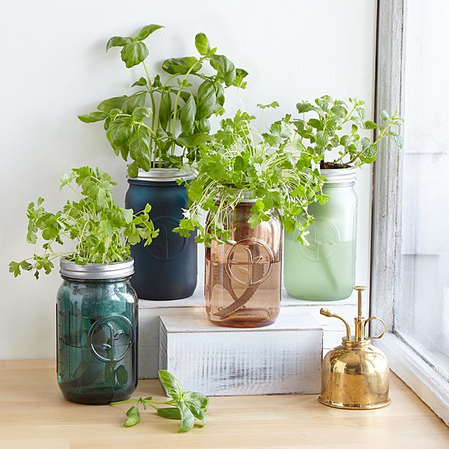 Mason Jar Indoor Herb Garden | Hydroponic Grow Kit | UncommonGoods