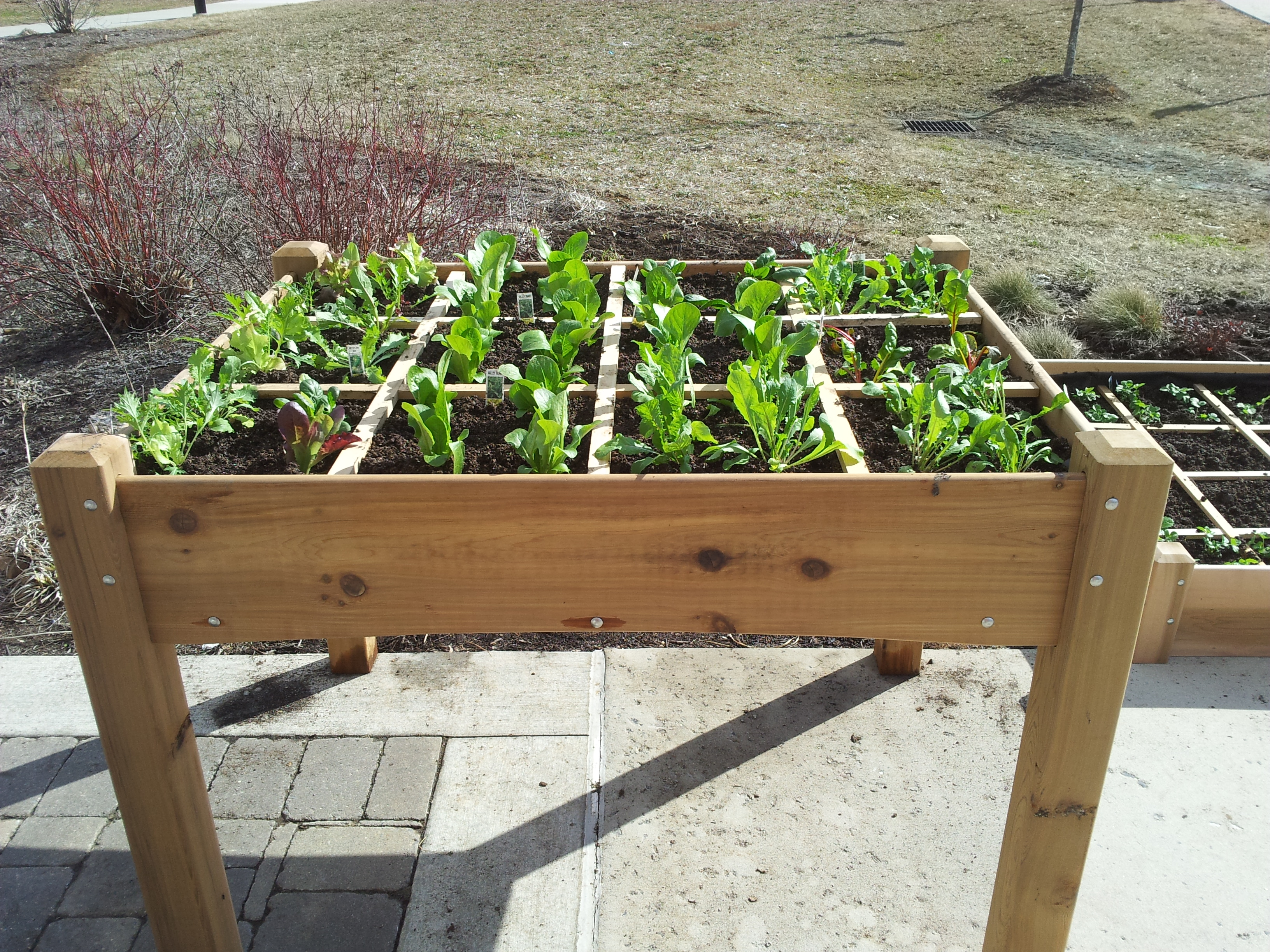 all cedar garden table-$429 HETFWSP