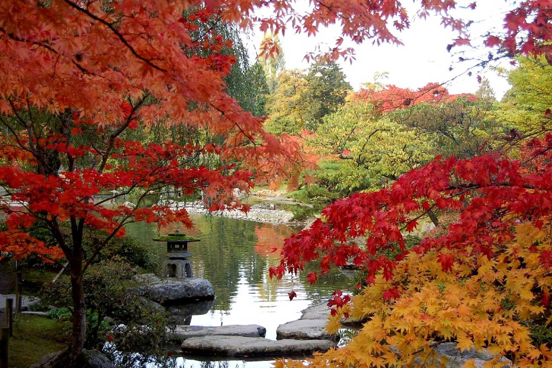 autumn at the seattle japanese garden NZKOFRD