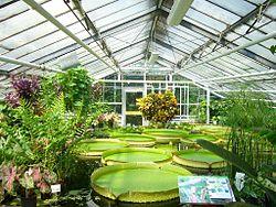 botanical gardens braunschweig botanical garden, braunschweig, germany victoria amazonica,  giant amazon water lily BPPUTWC