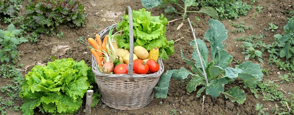 home garden vegetable basket XOHSDEQ