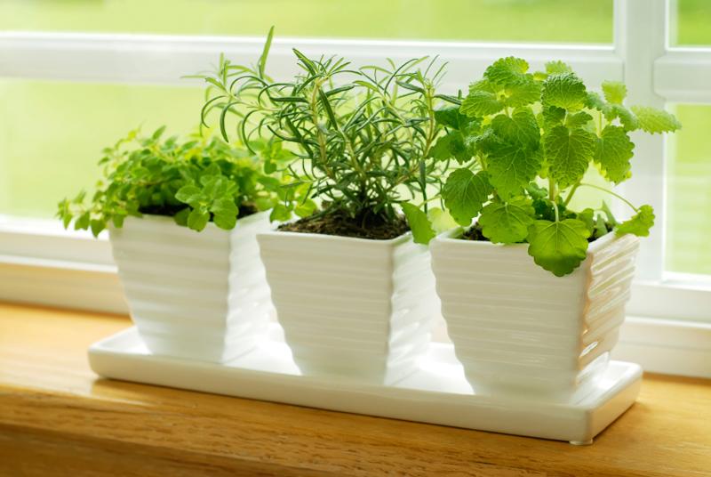 indoor herb garden how to grow herbs indoors - bonnie plants CSLYPEE