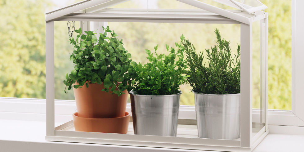 indoor herb garden ikea socker greenhouse YRWWMSN