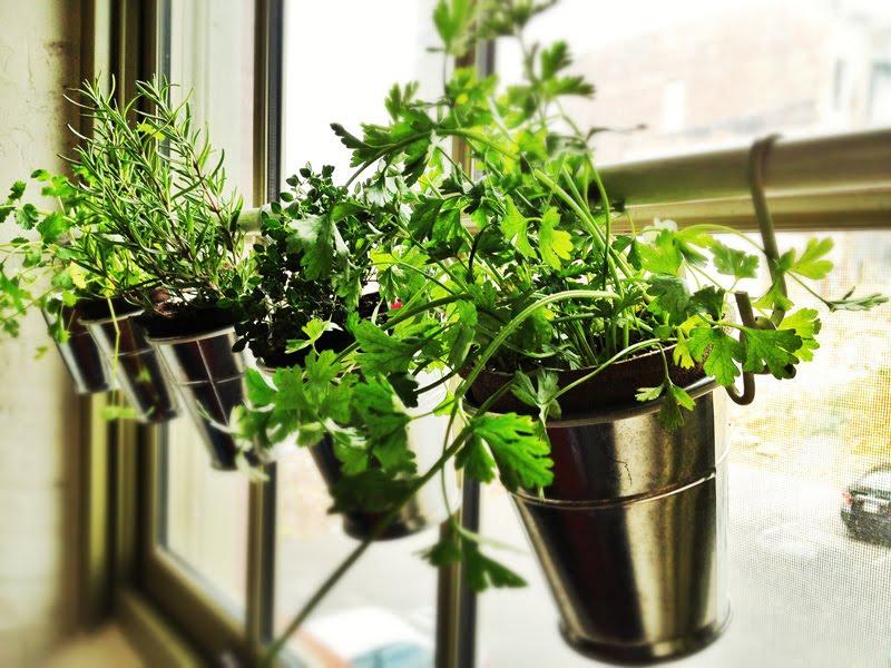 indoor herb garden windowsill herb garden HLDRIIZ