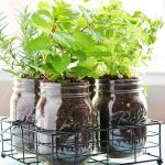 How to Create an Awesome Indoor Herb Garden