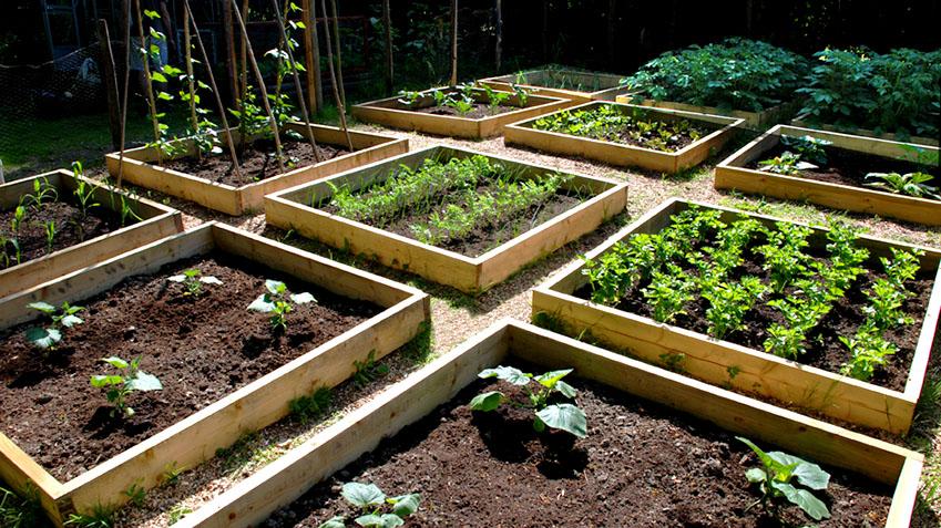 raised bed garden raised bed gardening JVNLOEP