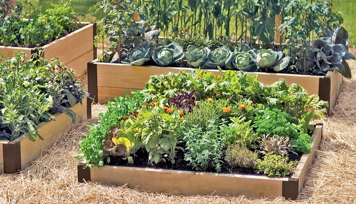 raised bed garden raised beds used to make a kitchen garden GQETALM