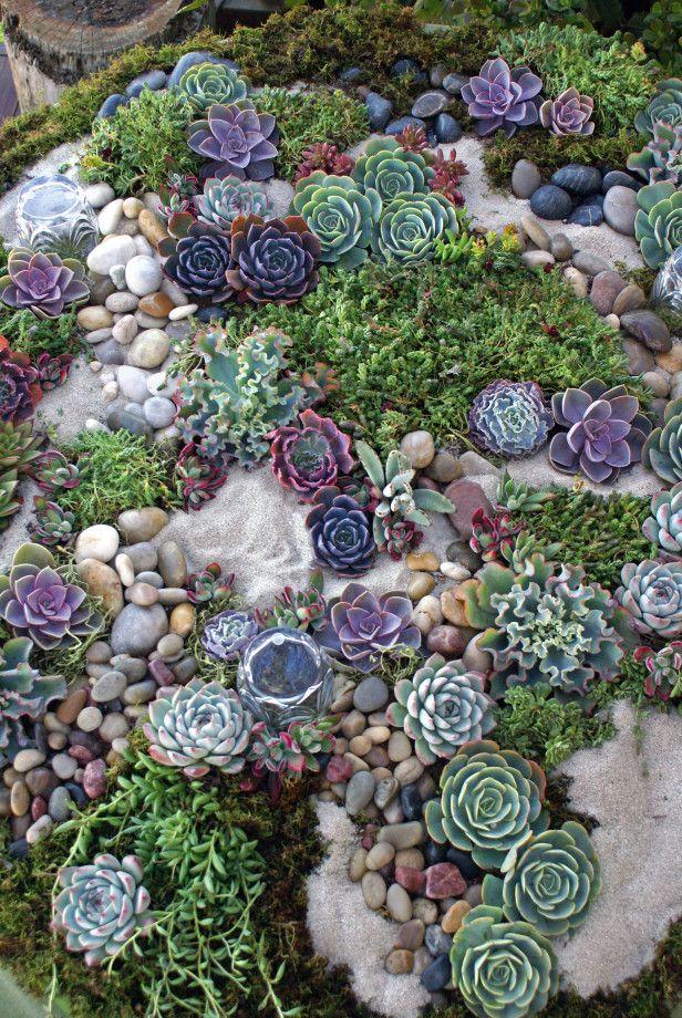 succulent rock garden u2026 VOLBBUA