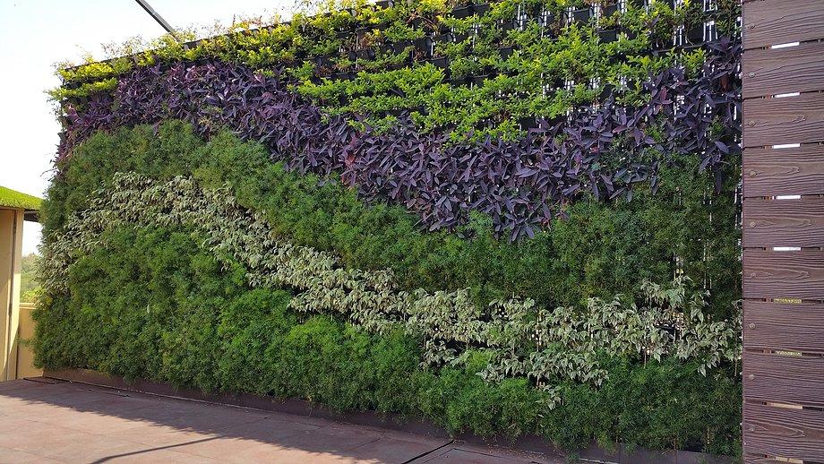vertical garden mumbai ZPSGVCL