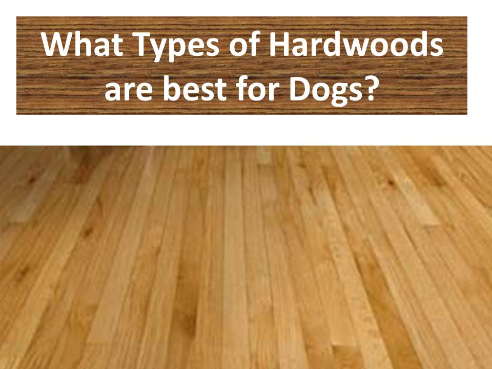 hardwood flooring types decor of best wood flooring for dogs best hardwood floor for dogs types OWRKLJI