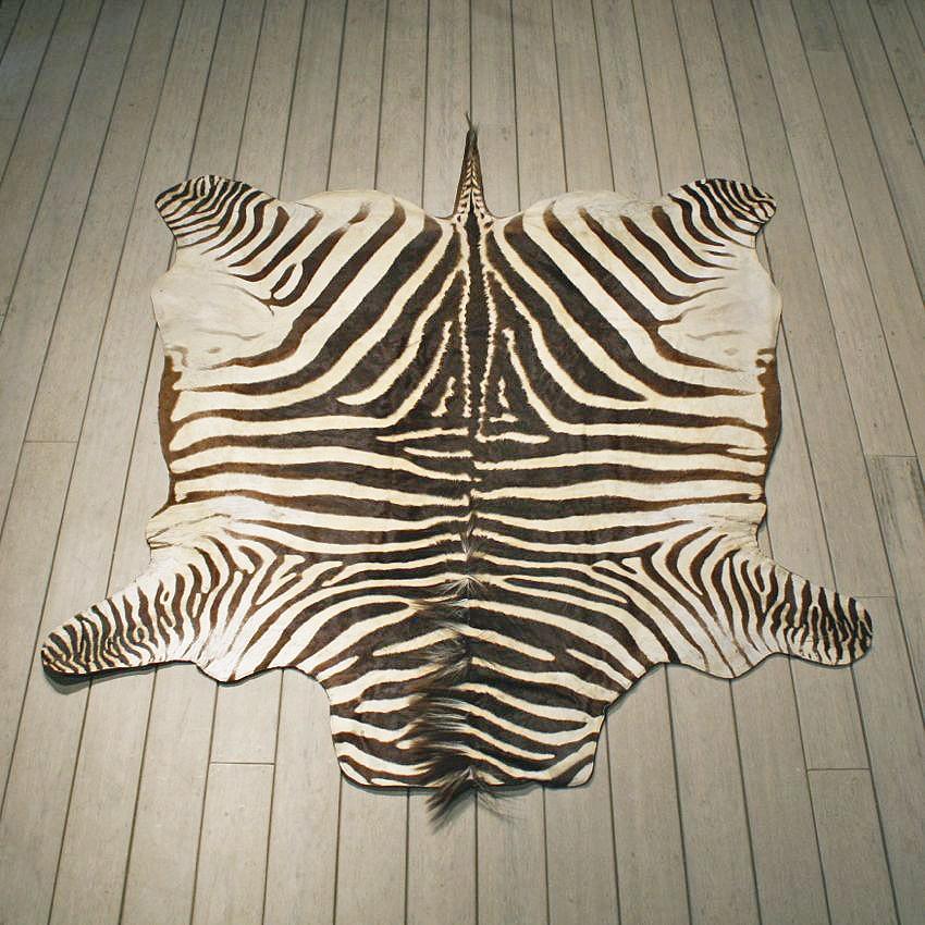 zebra rugs zebra rug mount #10953 - the taxidermy store PKYLSSY
