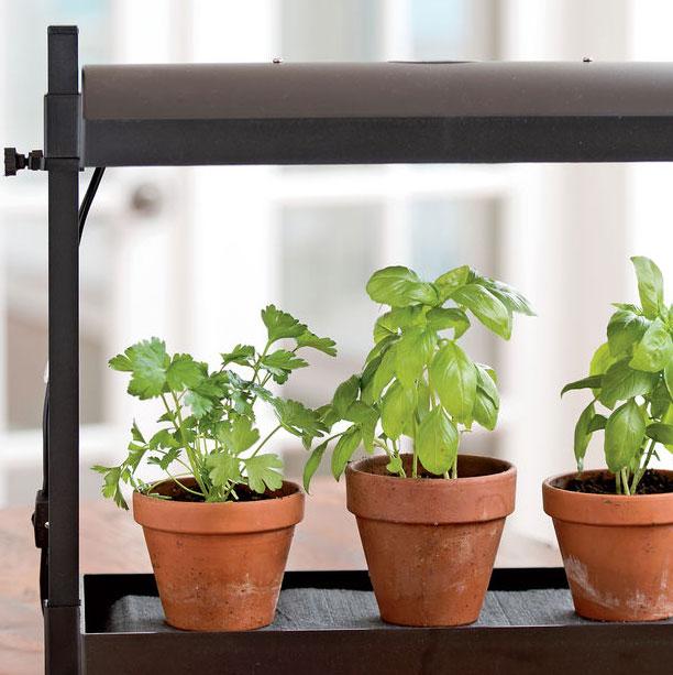 Best Herbs for Growing Indoors   Gardener's Supply