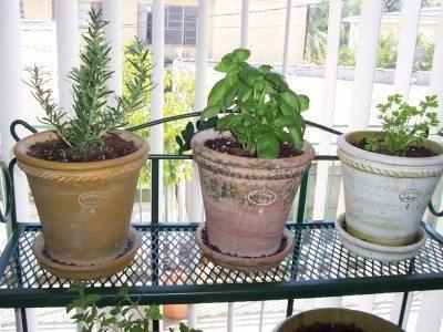 Growing Herbs Indoors: How To Grow Herbs Indoors